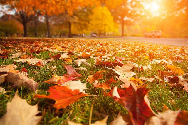 Estações do Ano - Datas e características de cada uma - Outono