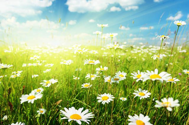 Estações do Ano - Datas e características de cada uma - Primavera