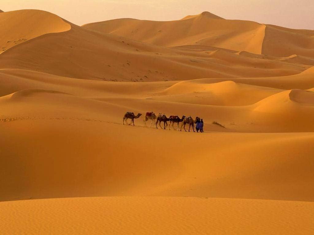 Camelos sobre dunas, Deserto do Saara