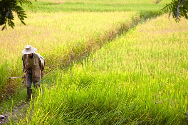 O êxodo rural ocorre em um período de tempo determinado
