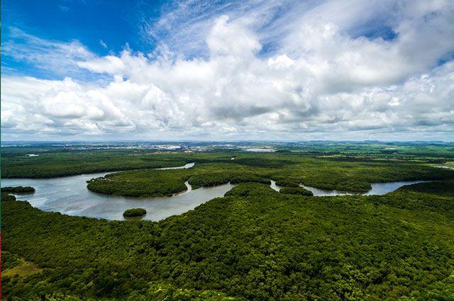 Tipos de vegetação do Brasil - Amazonia