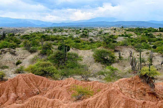 Tipos de vegetação do Brasil - Caatinga