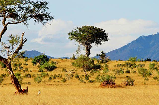 Tipos de vegetação do Brasil - Cerrado