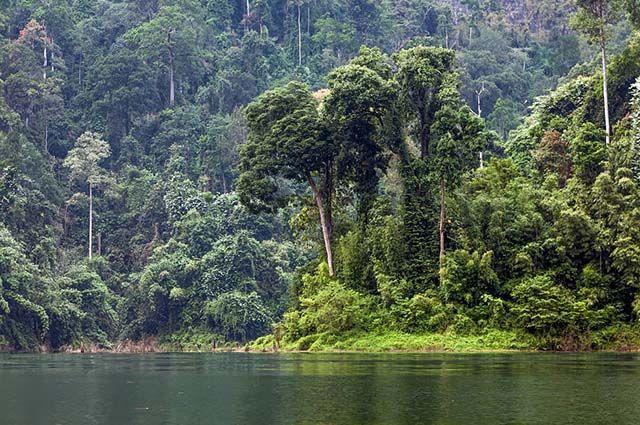 Tipos de vegetação do Brasil - Mata Atlântica