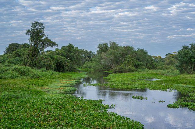 Tipos de vegetação do Brasil - Pantanal