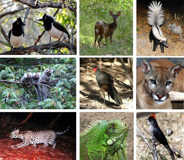 Caatinga - Fauna, flora e outras características - Fauna do Semiárido