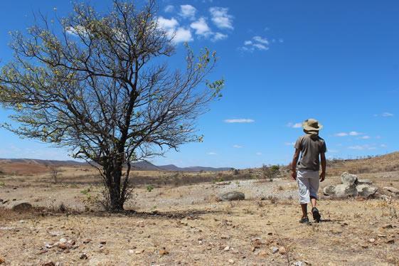 Caatinga - Fauna, flora e outras características