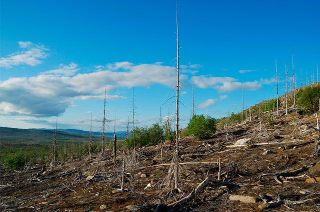 Chuva ácida - Causas e consequências - Prejuízos ao ambiente