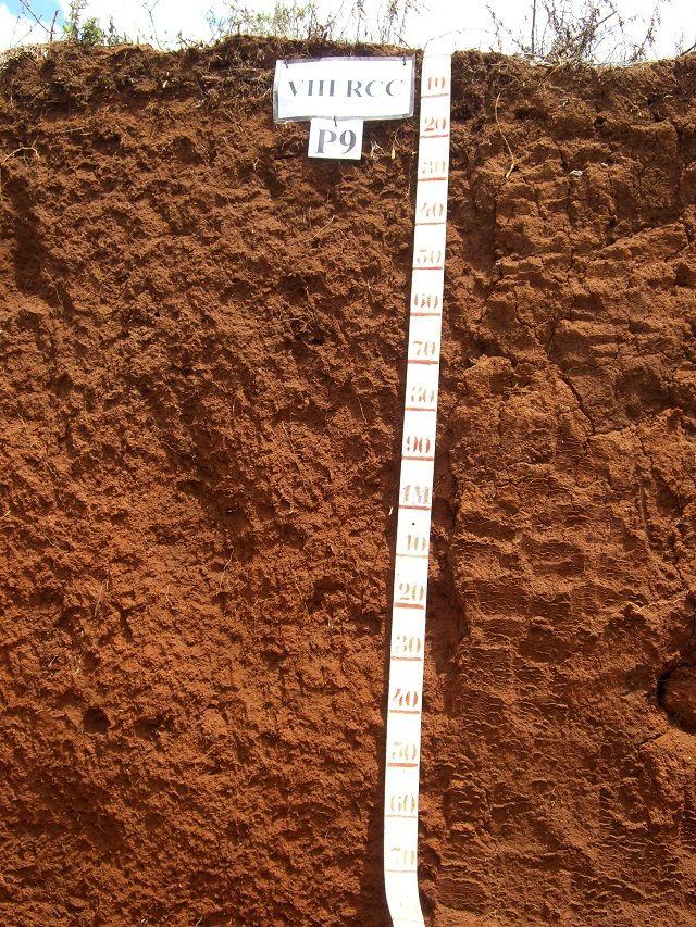 Tipos de solos do Brasil - Latossolos