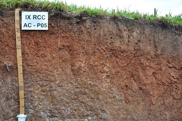 Tipos de solos do Brasil - Argilossolos