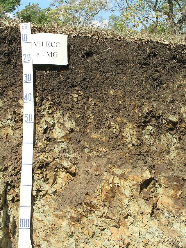 Tipos de solos do Brasil - Neossolos