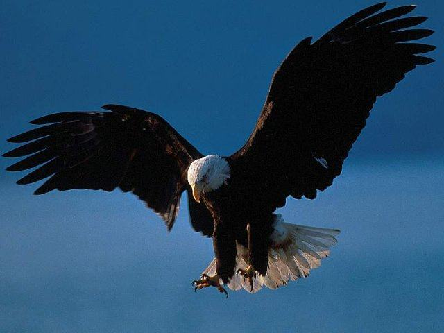 Imagem de uma ave