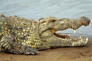 Animais vertebrados – Fotos, características e classificação