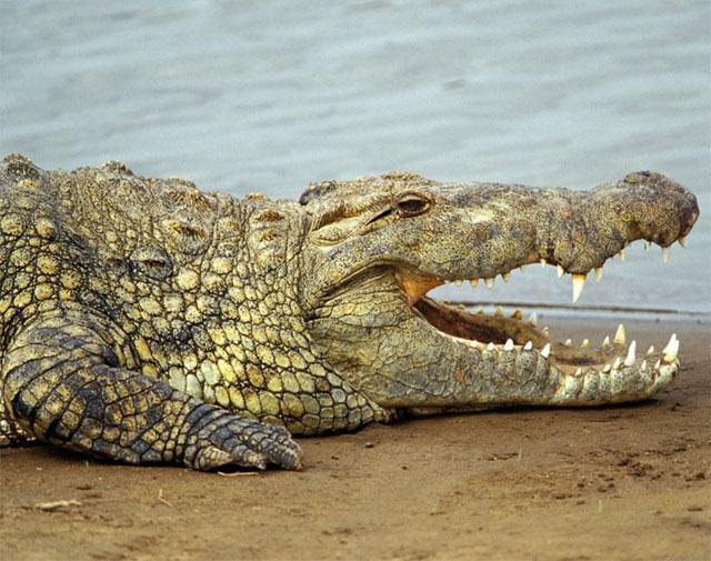 Imagem de animal vertebrado
