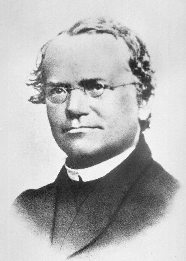 As leis de Mendel, o pai da Genética - Gregor Mendel