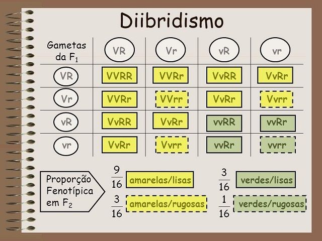 As leis de Mendel, o pai da Genética - Diibridismo