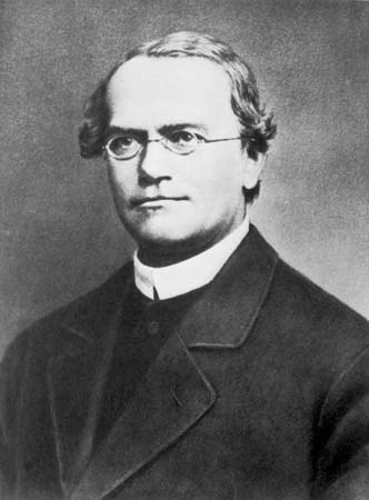 As leis de Mendel, o pai da Genética