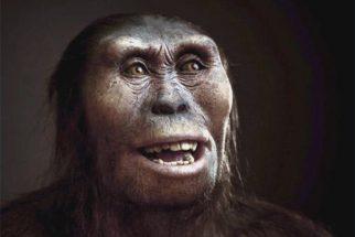 Australopithecus – Comportamento e características