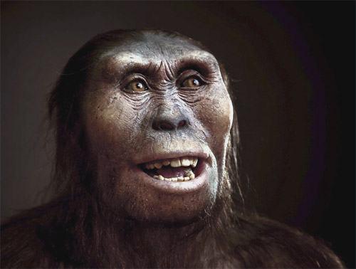Australopithecus - Face