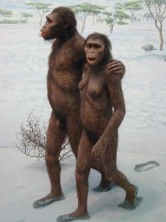 Casal de Australopithecus