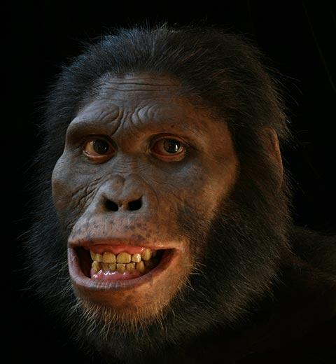 Australopithecus - Ancestral do homem