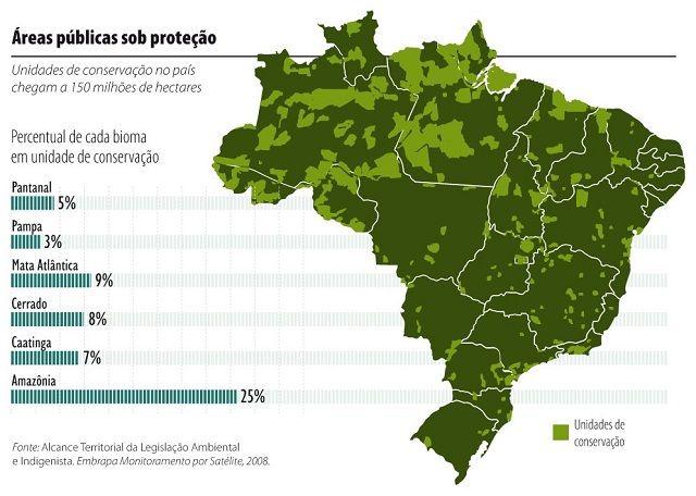 Cerrado brasileiro – fauna, flora e outras características