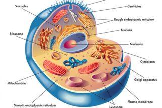 Citoplasma das células – Função e composição