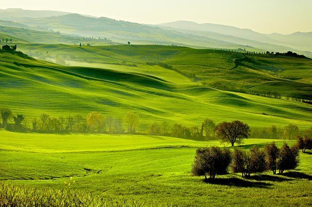 Estepes e pradarias - Vegetação, animais e fotos