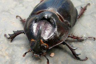 Exemplos e fotos de animais invertebrados