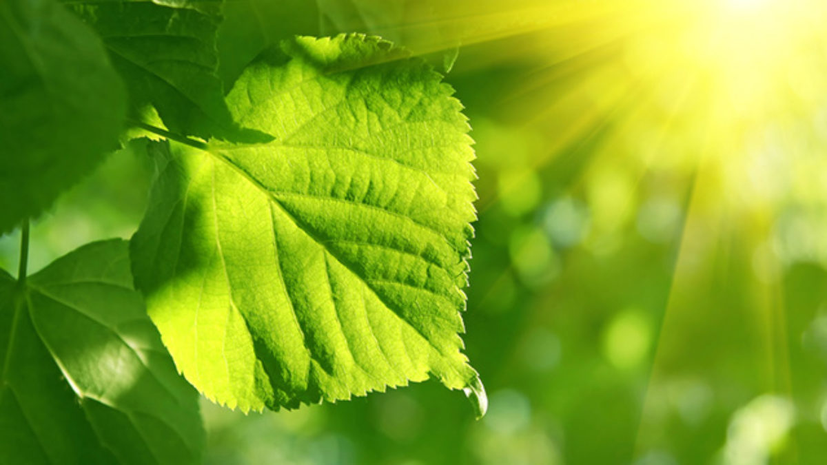 Fotossíntese das plantas - Entenda esse processo e suas fases - Estudo  Prático