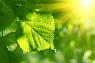 Fotossíntese das plantas – Entenda esse processo e suas fases