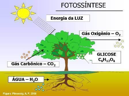 Fotossíntese das plantas - Entenda esse processo e suas fases ...