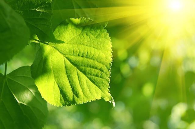 Folha recebendo luz solar