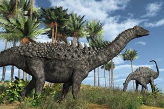 História e imagens dos dinossauros