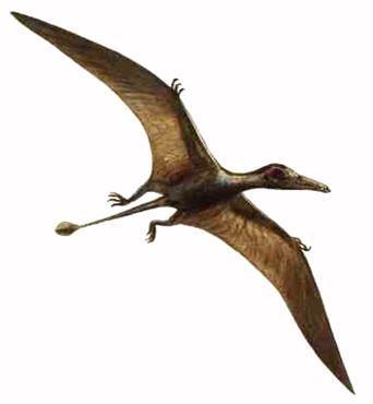 Dinossauro Pterodáctilo