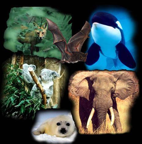 Mamíferos - Reprodução e características desses animais