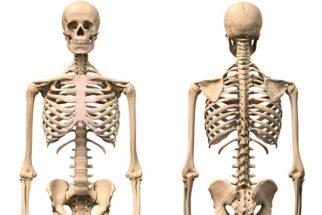 Ossos do corpo humano – Nomes e funções