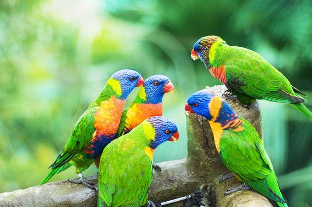 Reprodução das aves