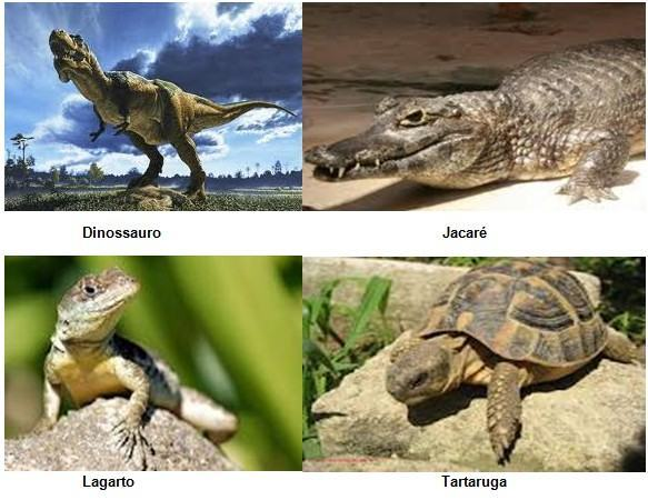 Répteis - Características, habitat e anatomia