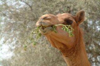 Animais herbívoros – Características e fotos de exemplos