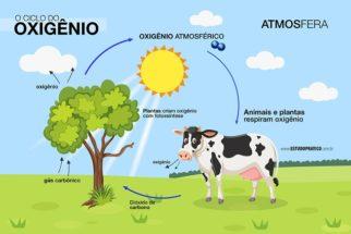Ciclo do oxigênio e sua importância