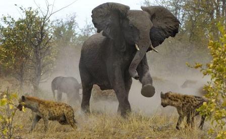 Elefante - Animal herbívoro