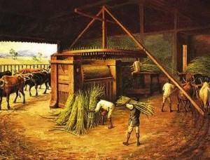Escravos trabalhando em engenho