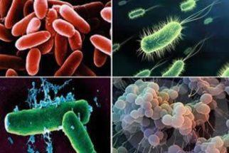 Reino Monera – Características das bactérias