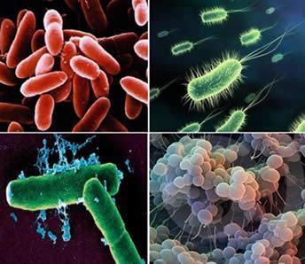 Reino Monera - Características das bactérias