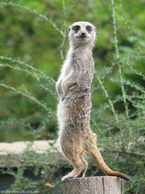Animais onívoros - Características e fotos de exemplos - Estudo ...