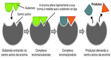 Mecanismo de ação das enzimas