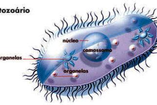 Protozoários – Reprodução, doenças e características
