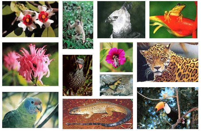 Descubra o que é a biodiversidade