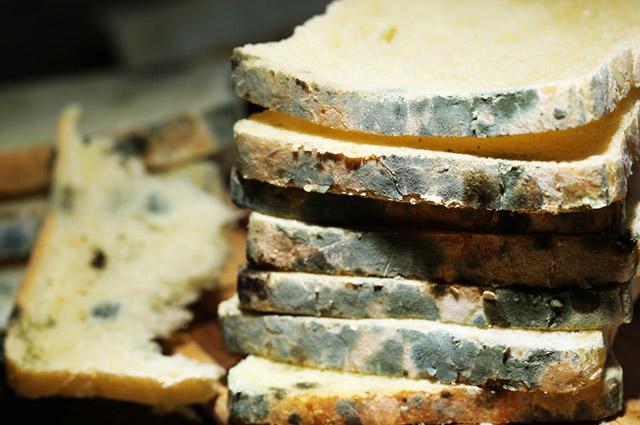 Pão com mofo